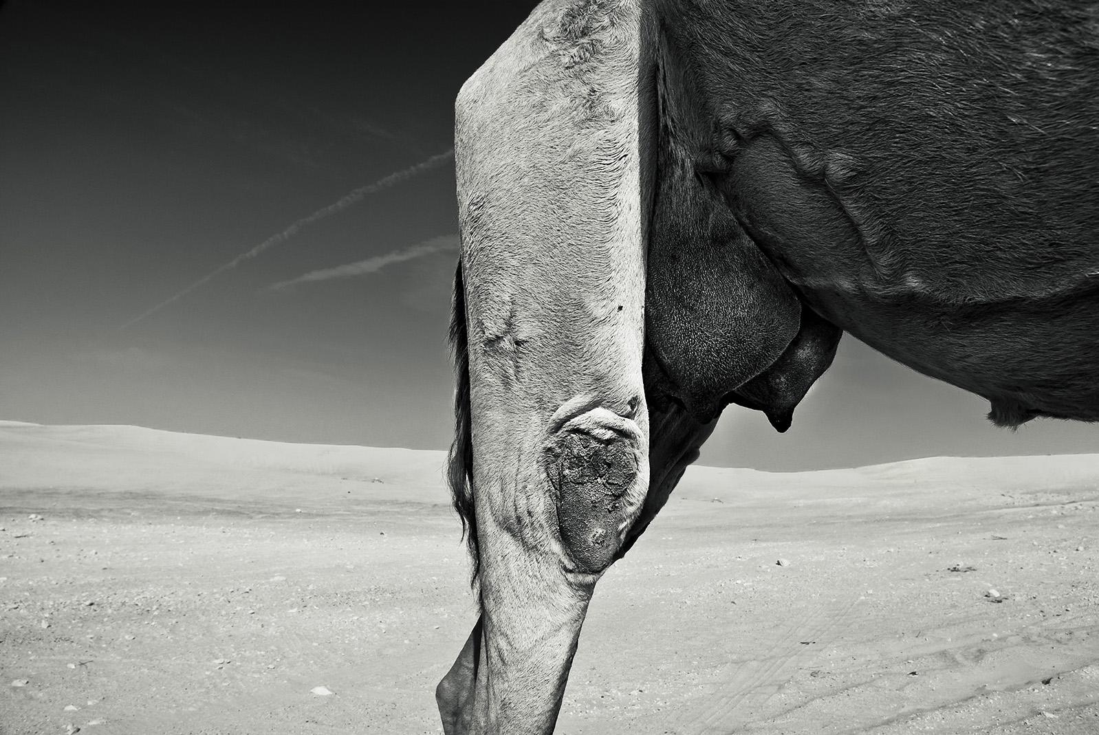 LITEMATTER camel 1