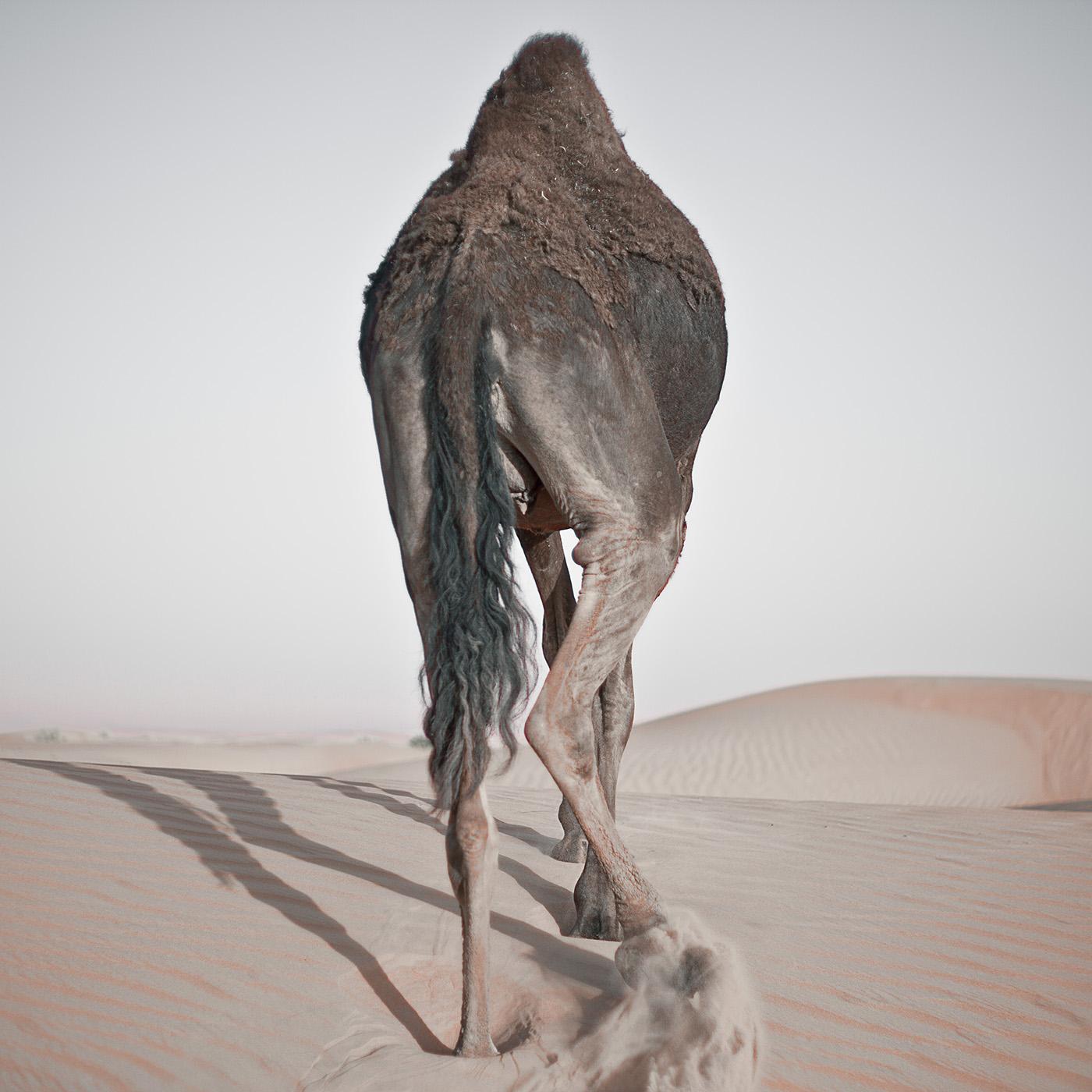 LITEMATTER camel 2