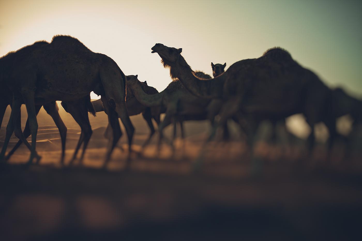 LITEMATTER camel 6
