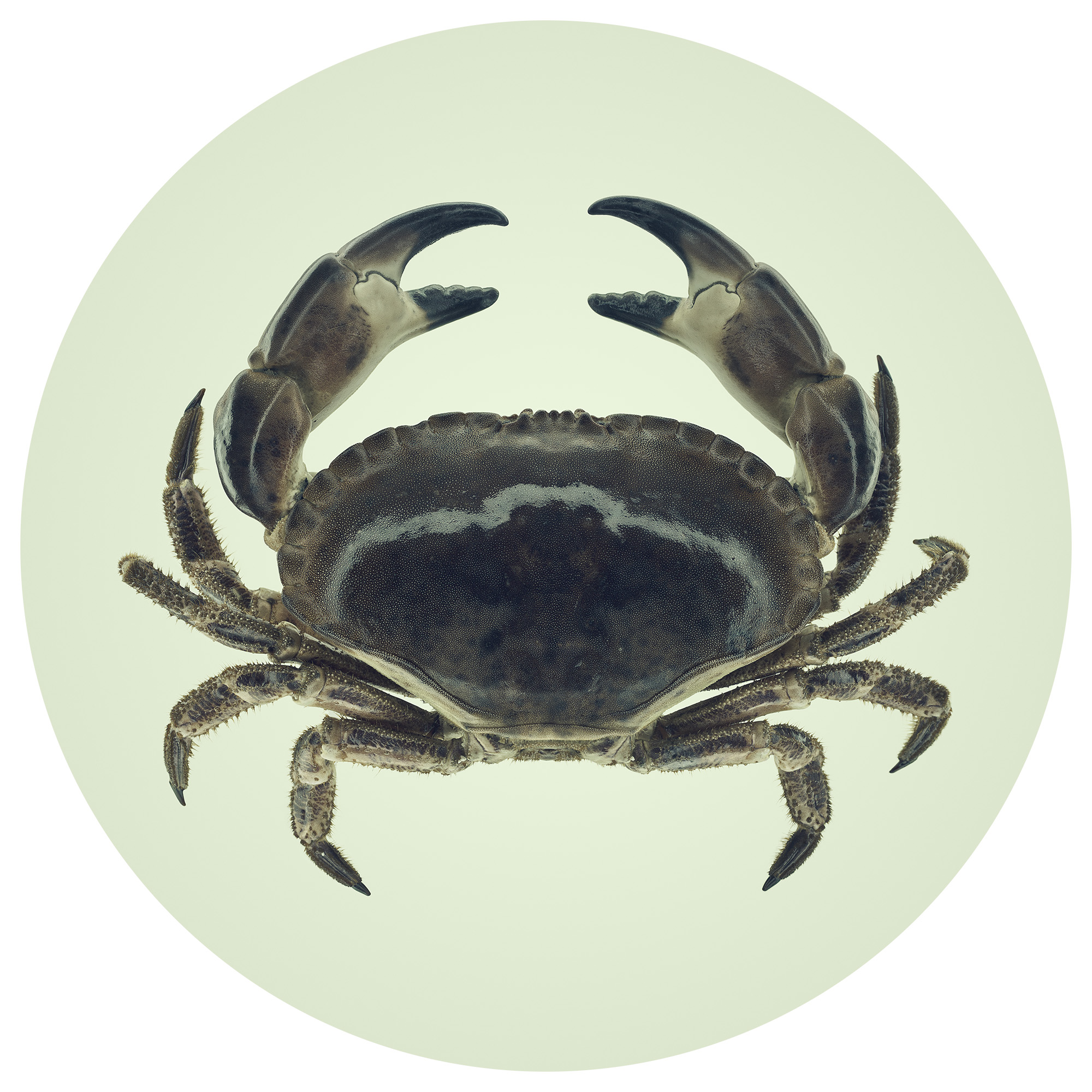LITEMATTER - Crab 1
