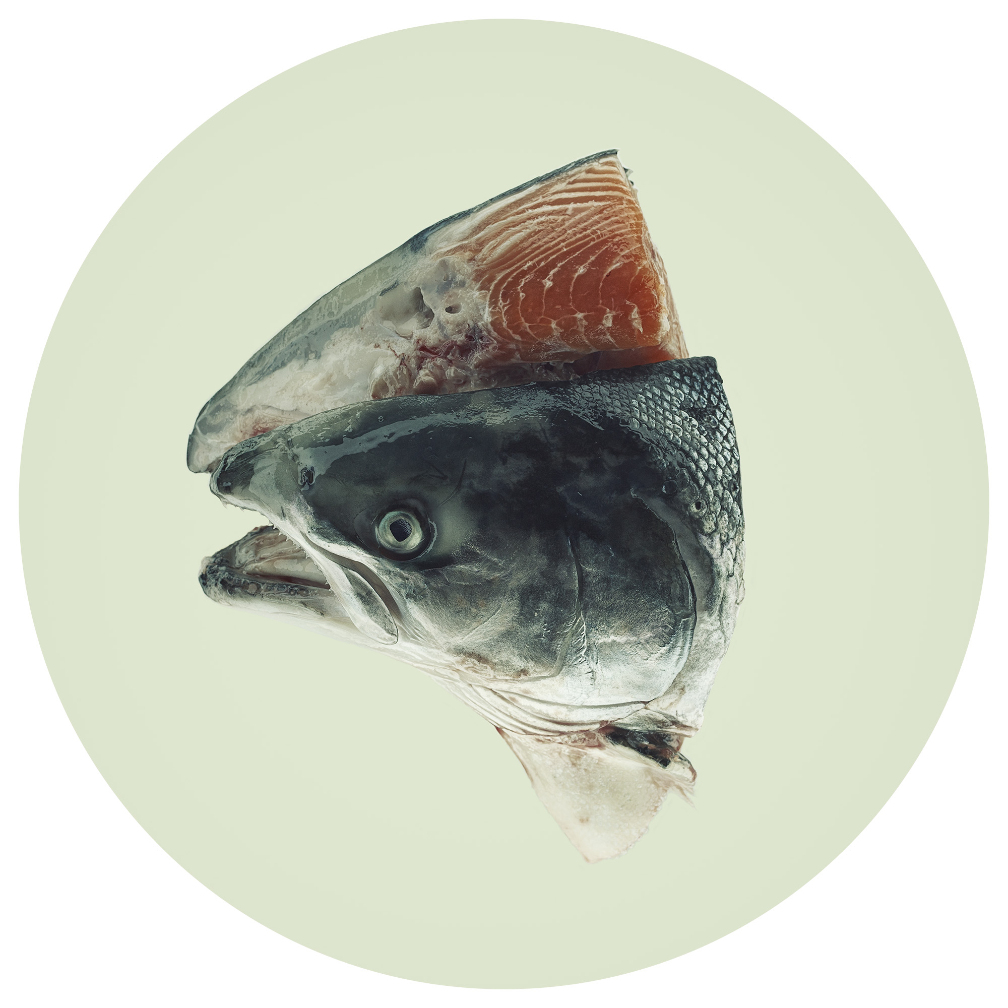 LITEMATTER - Fish